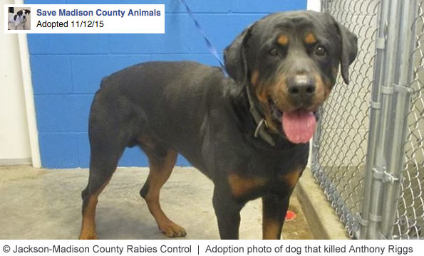 Jackson Rabies Control adopted out rottweiler that killed man three hours later