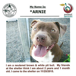 adoption listing advertisement - sonoma county animal shelter
