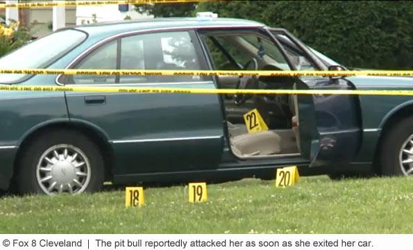 pit bull kills woman in shaker heights