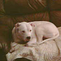 Ceara Schofield nearly killed by family American bulldogs