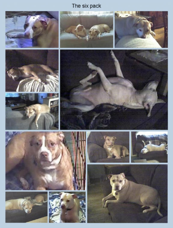 mother's pit bulls that killed Christine Staab