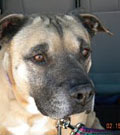 Beans killed by Victory dog at Best Friends sanctuary