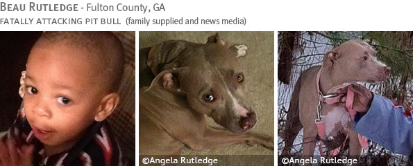 Fatal pit bull attack - Beau Rutledge photo