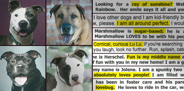 more shelters adopting out aggressive dogs