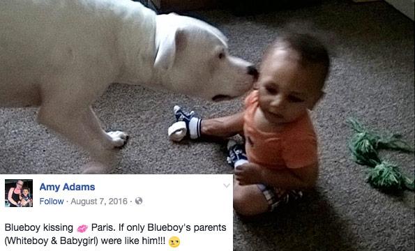 paris adams killed by family pit bull