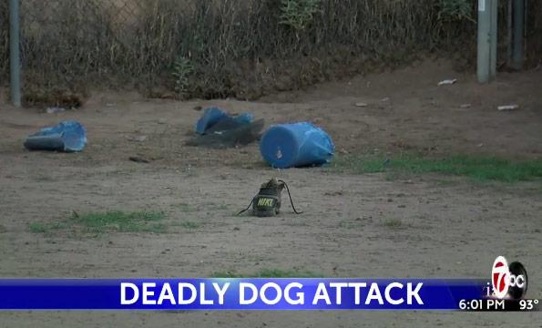 backyard where dogs killed el paso boy