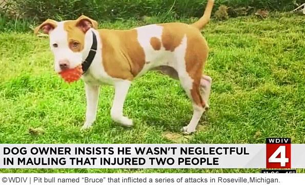 roseville pit bull attacks mother twice
