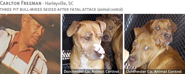 Fatal pit bull attack - Cartlon Freeman photo