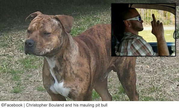 chris bouland vicious pit bull