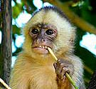 Monkey No Service Animal