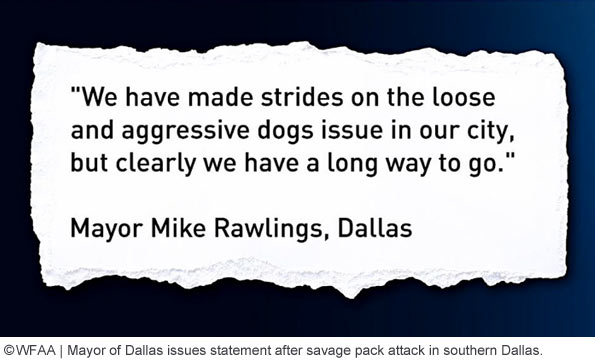 dog attack southern dallas