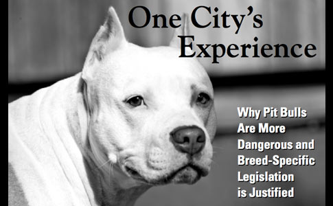 the history of the denver pit bull ban, one city's experience