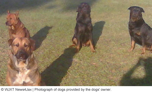 dogs suspected in attack that kills man