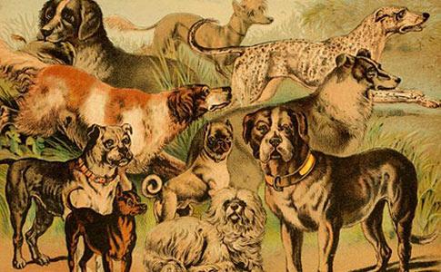 domesticated dog breeds illustration