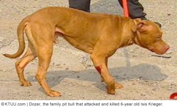 family pit bull that killed isis kreiger