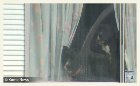 Dogs Seen Through Window of Dog Owners Home