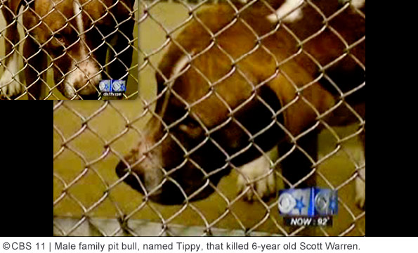 male pit bull kills scott warren