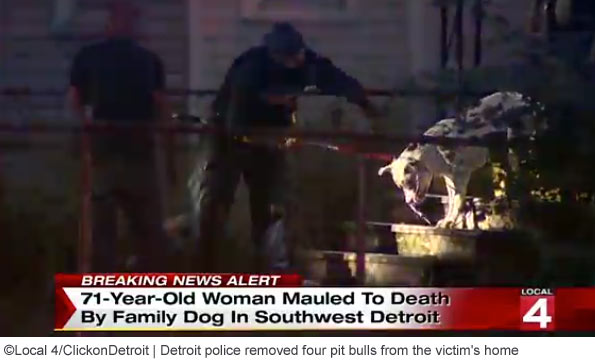 family pit bull kills detroit woman