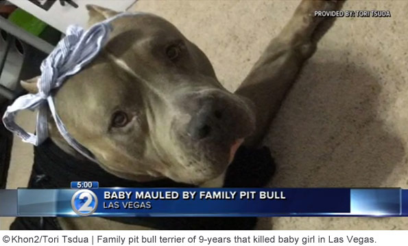 family pit bull that killed baby las vegas