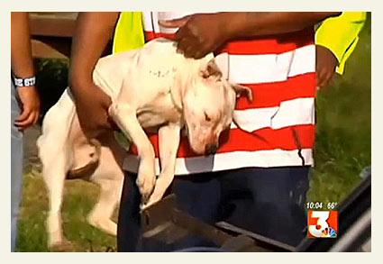 pit bulls kill boy in holmes county, mississippi