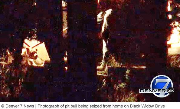 family pit bulls kill woman in conifer colorado