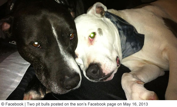 Suspected fatally attacking family pit bulls