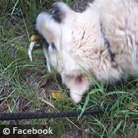fatal dog attack Autauga County Alabama Barbara McCormick