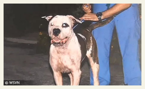dogs kill woman in southwest Miami-dade