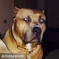 family pit bull kills Mia DeRouen