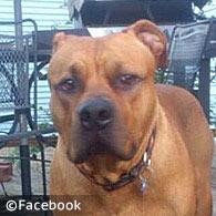 family pit bull kills Kara Hartrich