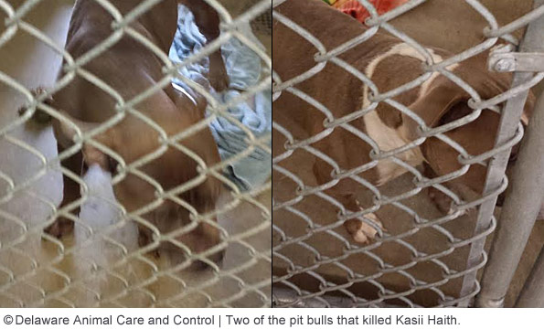 Delaware Animal Care and Control officials released these photos of the three dogs prior to their being euthanized