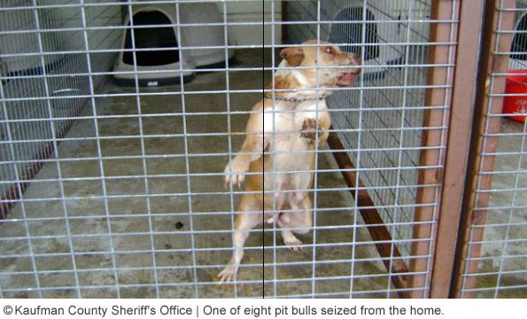 pit bull kill kaufman woman dorothy hamilton