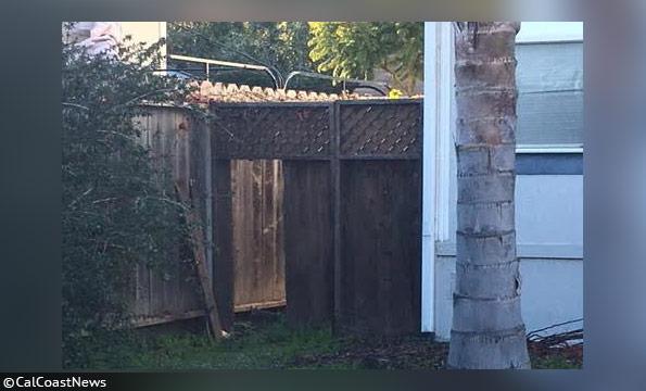 alex geigers fence fatal dog mauling