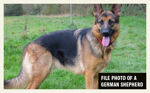 ida grove woman killed by her german shepherd