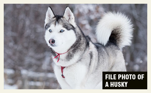boy killed by chained husky