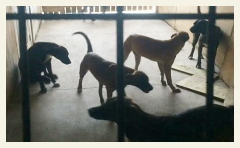 guard dogs kill man in Miami Dade county