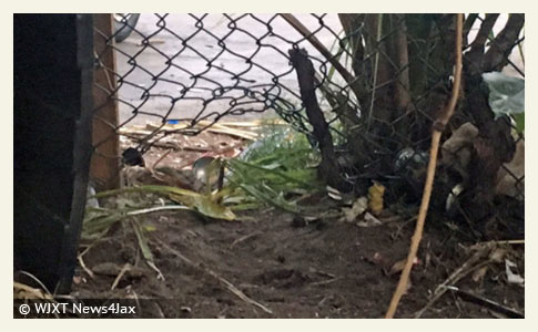 dogs kill man in jacksonville