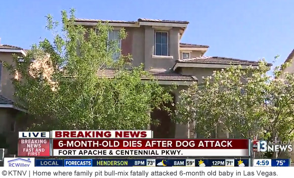 home where pit bull killed baby in northwest las vegas