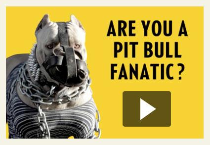 National post columnist comments on pit bull fanatics