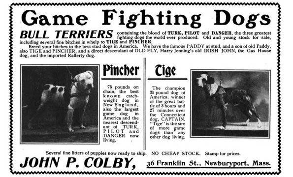 John P Colby fighting pit bulls advertisement game dogs