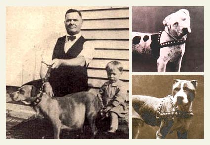 1909 Dog Bite Fatality: John P  Colby's Fighting Pit Bull