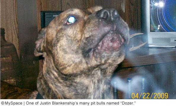 pit bull involved in fatal attack of Lowell Boden