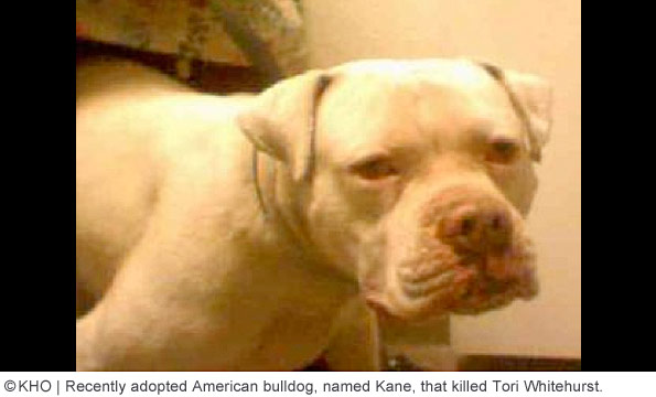 Kane adopted american bulldog that killed tori whitehurst