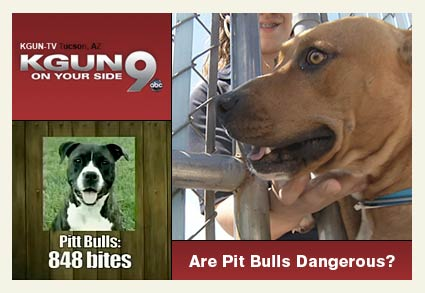Are pit bulls dangerous, truth about pit bulls KGUN