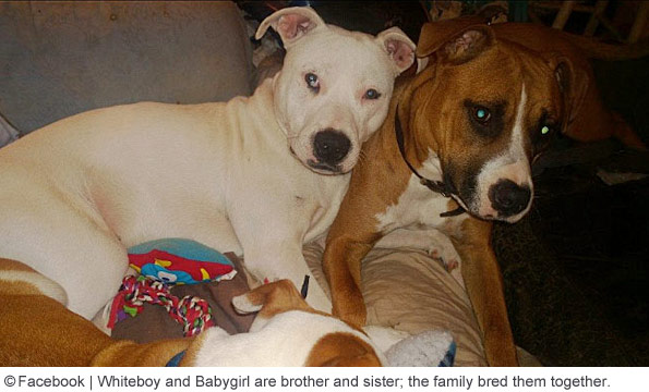 2017 Dog Bite Fatality: Child Killed by Two Family Pit Bulls in Hart