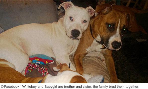 pit bulls that killed paris adams are siblings