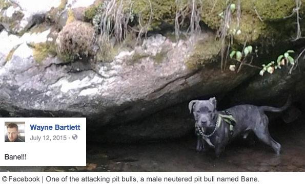 Bane, suspected attacker bozeman mauling