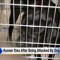 mastiffs, cane corso kill jogger in metamora