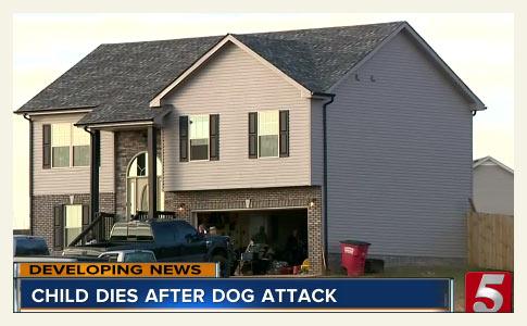mastiffs kill boy in clarksville, montgomery county