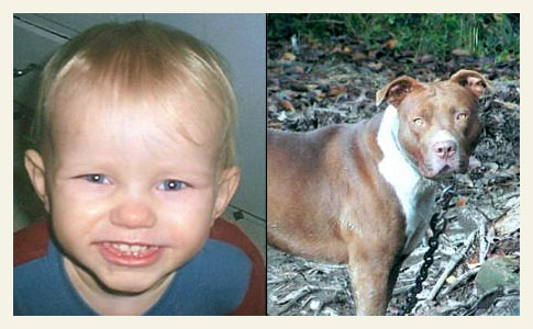 Prescott boy killed by chained pit bull